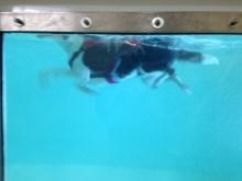 Marios pawfect doggy paddle
