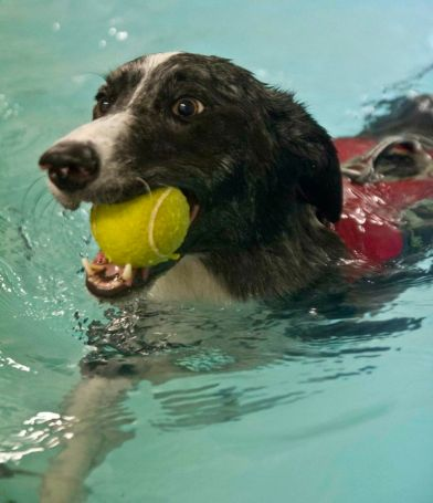 Jasper showing that even epilepsy can't stop a great swimmer